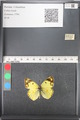 http://mczbase.mcz.harvard.edu/specimen_images/ent-lepidoptera/images/2011_03_21/IMG_077832.JPG