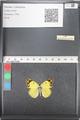 http://mczbase.mcz.harvard.edu/specimen_images/ent-lepidoptera/images/2011_03_21/IMG_077834.JPG