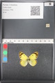 http://mczbase.mcz.harvard.edu/specimen_images/ent-lepidoptera/images/2011_03_21/IMG_077835.JPG