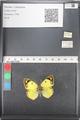 http://mczbase.mcz.harvard.edu/specimen_images/ent-lepidoptera/images/2011_03_21/IMG_077836.JPG