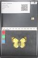http://mczbase.mcz.harvard.edu/specimen_images/ent-lepidoptera/images/2011_03_21/IMG_077837.JPG