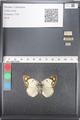 http://mczbase.mcz.harvard.edu/specimen_images/ent-lepidoptera/images/2011_03_21/IMG_077838.JPG