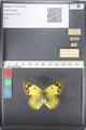 http://mczbase.mcz.harvard.edu/specimen_images/ent-lepidoptera/images/2011_03_21/IMG_077839.JPG