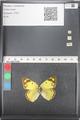 http://mczbase.mcz.harvard.edu/specimen_images/ent-lepidoptera/images/2011_03_21/IMG_077841.JPG