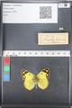 http://mczbase.mcz.harvard.edu/specimen_images/ent-lepidoptera/images/2011_03_21/IMG_077842.JPG