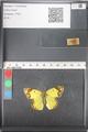 http://mczbase.mcz.harvard.edu/specimen_images/ent-lepidoptera/images/2011_03_21/IMG_077843.JPG