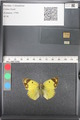 http://mczbase.mcz.harvard.edu/specimen_images/ent-lepidoptera/images/2011_03_21/IMG_077844.JPG