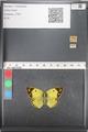 http://mczbase.mcz.harvard.edu/specimen_images/ent-lepidoptera/images/2011_03_21/IMG_077845.JPG