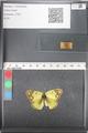 http://mczbase.mcz.harvard.edu/specimen_images/ent-lepidoptera/images/2011_03_21/IMG_077848.JPG