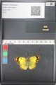 http://mczbase.mcz.harvard.edu/specimen_images/ent-lepidoptera/images/2011_03_21/IMG_077849.JPG