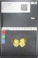 http://mczbase.mcz.harvard.edu/specimen_images/ent-lepidoptera/images/2011_03_21/IMG_077851.JPG