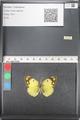 http://mczbase.mcz.harvard.edu/specimen_images/ent-lepidoptera/images/2011_03_21/IMG_077852.JPG