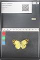 http://mczbase.mcz.harvard.edu/specimen_images/ent-lepidoptera/images/2011_03_21/IMG_077856.JPG