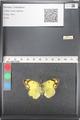 http://mczbase.mcz.harvard.edu/specimen_images/ent-lepidoptera/images/2011_03_21/IMG_077857.JPG