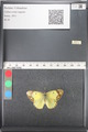 http://mczbase.mcz.harvard.edu/specimen_images/ent-lepidoptera/images/2011_03_21/IMG_077858.JPG