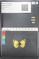 http://mczbase.mcz.harvard.edu/specimen_images/ent-lepidoptera/images/2011_03_21/IMG_077859.JPG