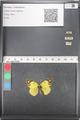 http://mczbase.mcz.harvard.edu/specimen_images/ent-lepidoptera/images/2011_03_21/IMG_077860.JPG