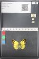http://mczbase.mcz.harvard.edu/specimen_images/ent-lepidoptera/images/2011_03_21/IMG_077861.JPG