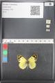 http://mczbase.mcz.harvard.edu/specimen_images/ent-lepidoptera/images/2011_03_21/IMG_077862.JPG