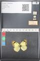 http://mczbase.mcz.harvard.edu/specimen_images/ent-lepidoptera/images/2011_03_21/IMG_077864.JPG