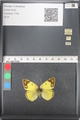 http://mczbase.mcz.harvard.edu/specimen_images/ent-lepidoptera/images/2011_03_21/IMG_077865.JPG