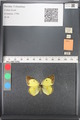 http://mczbase.mcz.harvard.edu/specimen_images/ent-lepidoptera/images/2011_03_21/IMG_077867.JPG