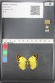 http://mczbase.mcz.harvard.edu/specimen_images/ent-lepidoptera/images/2011_03_21/IMG_077869.JPG