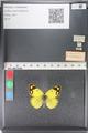 http://mczbase.mcz.harvard.edu/specimen_images/ent-lepidoptera/images/2011_03_23/IMG_078361.JPG