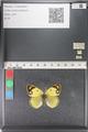http://mczbase.mcz.harvard.edu/specimen_images/ent-lepidoptera/images/2011_03_23/IMG_078362.JPG