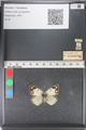 http://mczbase.mcz.harvard.edu/specimen_images/ent-lepidoptera/images/2011_03_23/IMG_078363.JPG