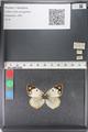 http://mczbase.mcz.harvard.edu/specimen_images/ent-lepidoptera/images/2011_03_23/IMG_078364.JPG