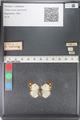 http://mczbase.mcz.harvard.edu/specimen_images/ent-lepidoptera/images/2011_03_23/IMG_078367.JPG
