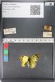 http://mczbase.mcz.harvard.edu/specimen_images/ent-lepidoptera/images/2011_03_23/IMG_078369.JPG