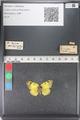 http://mczbase.mcz.harvard.edu/specimen_images/ent-lepidoptera/images/2011_03_23/IMG_078370.JPG