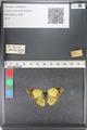 http://mczbase.mcz.harvard.edu/specimen_images/ent-lepidoptera/images/2011_03_23/IMG_078373.JPG