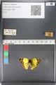 http://mczbase.mcz.harvard.edu/specimen_images/ent-lepidoptera/images/2011_03_23/IMG_078375.JPG