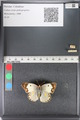 http://mczbase.mcz.harvard.edu/specimen_images/ent-lepidoptera/images/2011_03_23/IMG_078381.JPG