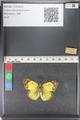 http://mczbase.mcz.harvard.edu/specimen_images/ent-lepidoptera/images/2011_03_23/IMG_078383.JPG