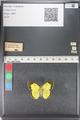 http://mczbase.mcz.harvard.edu/specimen_images/ent-lepidoptera/images/2011_03_23/IMG_078384.JPG