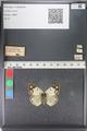 http://mczbase.mcz.harvard.edu/specimen_images/ent-lepidoptera/images/2011_03_23/IMG_078385.JPG