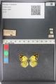 http://mczbase.mcz.harvard.edu/specimen_images/ent-lepidoptera/images/2011_03_23/IMG_078386.JPG