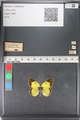 http://mczbase.mcz.harvard.edu/specimen_images/ent-lepidoptera/images/2011_03_23/IMG_078387.JPG