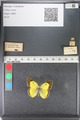 http://mczbase.mcz.harvard.edu/specimen_images/ent-lepidoptera/images/2011_03_23/IMG_078388.JPG
