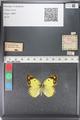 http://mczbase.mcz.harvard.edu/specimen_images/ent-lepidoptera/images/2011_03_23/IMG_078389.JPG
