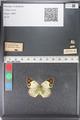 http://mczbase.mcz.harvard.edu/specimen_images/ent-lepidoptera/images/2011_03_23/IMG_078390.JPG