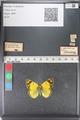 http://mczbase.mcz.harvard.edu/specimen_images/ent-lepidoptera/images/2011_03_23/IMG_078392.JPG