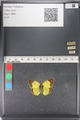 http://mczbase.mcz.harvard.edu/specimen_images/ent-lepidoptera/images/2011_03_23/IMG_078394.JPG