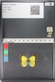 http://mczbase.mcz.harvard.edu/specimen_images/ent-lepidoptera/images/2011_03_23/IMG_078395.JPG