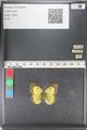 http://mczbase.mcz.harvard.edu/specimen_images/ent-lepidoptera/images/2011_03_23/IMG_078396.JPG