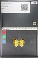 http://mczbase.mcz.harvard.edu/specimen_images/ent-lepidoptera/images/2011_03_23/IMG_078398.JPG